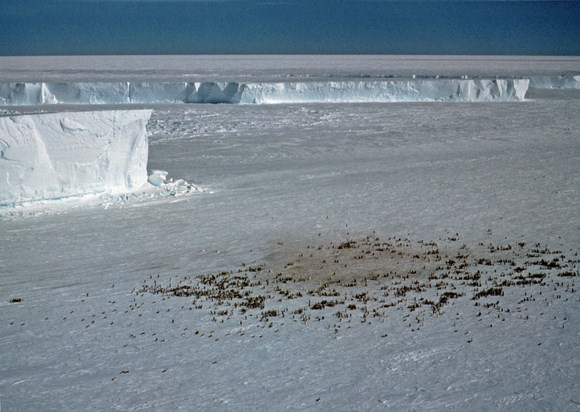 An emporer penguin colony at Halley Bay. Credit: British Antarctic Survey