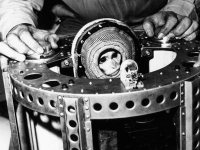 Image result for Albert, The First Monkey In Space