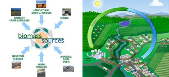 Biomass - which involves converting organic materials into energy - can come from a variety of sources. Credit: ecoble.com