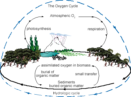 Oxygen Cycle Universe Today