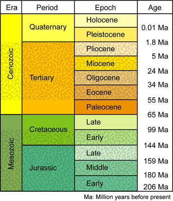 geological time scale activity. Geologic Time Scale.