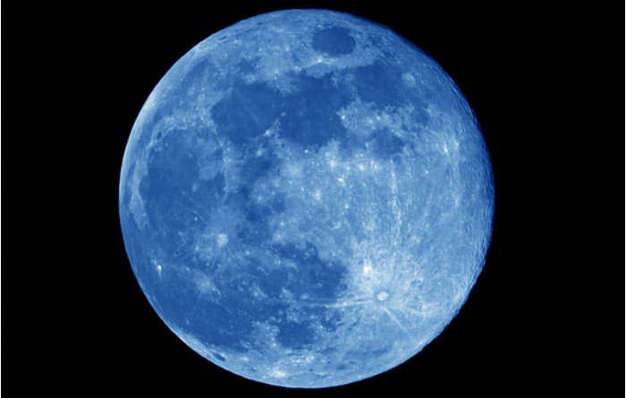 blue joey