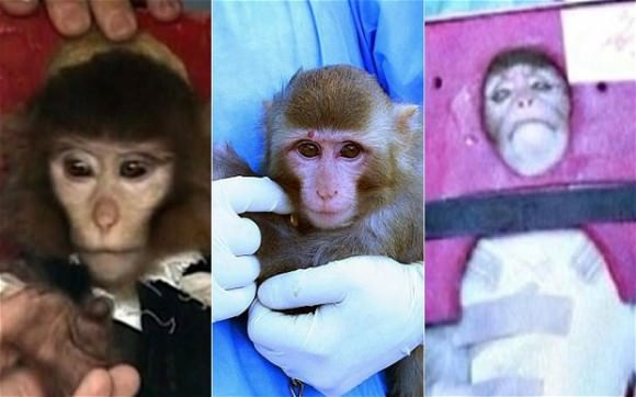 Monkey business? Iran displayed a decidedly different looking monkey before, during, and after launch earlier this year! (Credit: Iran News Agency).
