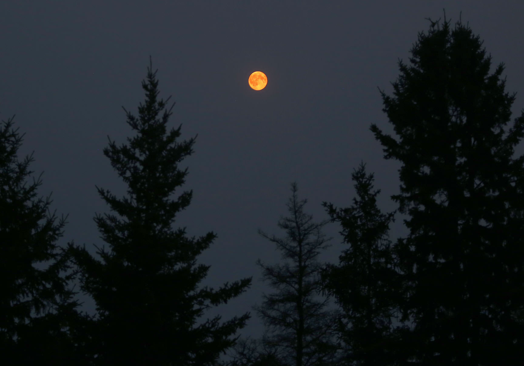 The Full Moon at 10:30 p.m. last night (Aug. 30). Even at 25 altitude, it glowed a deep, dark orange due to heavy smoke from western forest fires. Credit: Bob King