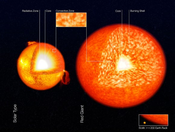An illustration of the structure of the Sun and a red giant star, showing their convective zones. These are the granular zones in the outer layers of the stars.