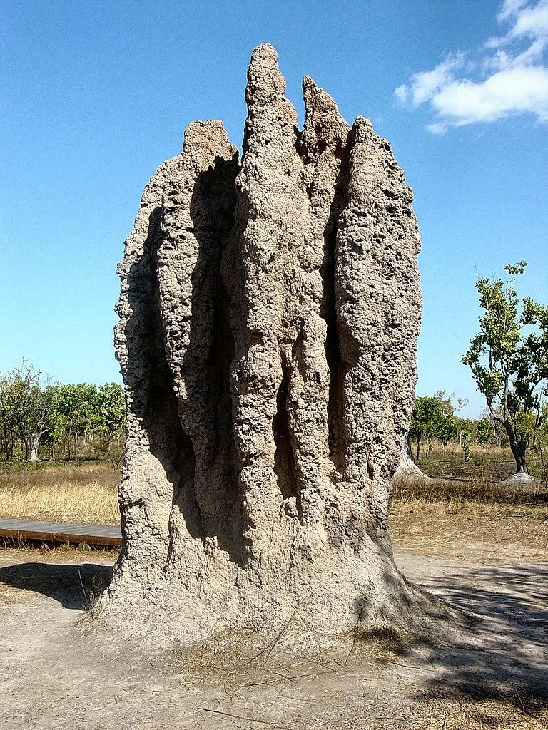The cathedral termite mound