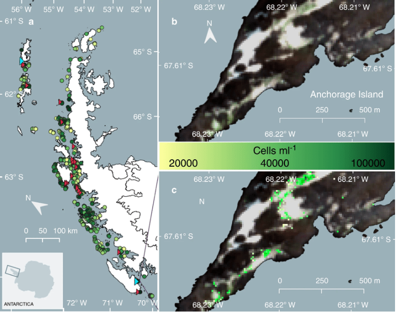 Overview of the locations of individual blooms of green-dominant snow algae identified across the Antarctic Peninsula using modelled data from satellite imagery and ground data (circles; n?=?1679). Circle colour scale represents the mean cell density (cells?ml?1) of each bloom. Red triangles indicate the location of ground validation sites (n?=?27). Yellow indicates lower cell density, while dark green indicates higher cell density. Image Credit: Davey et al, 2020.