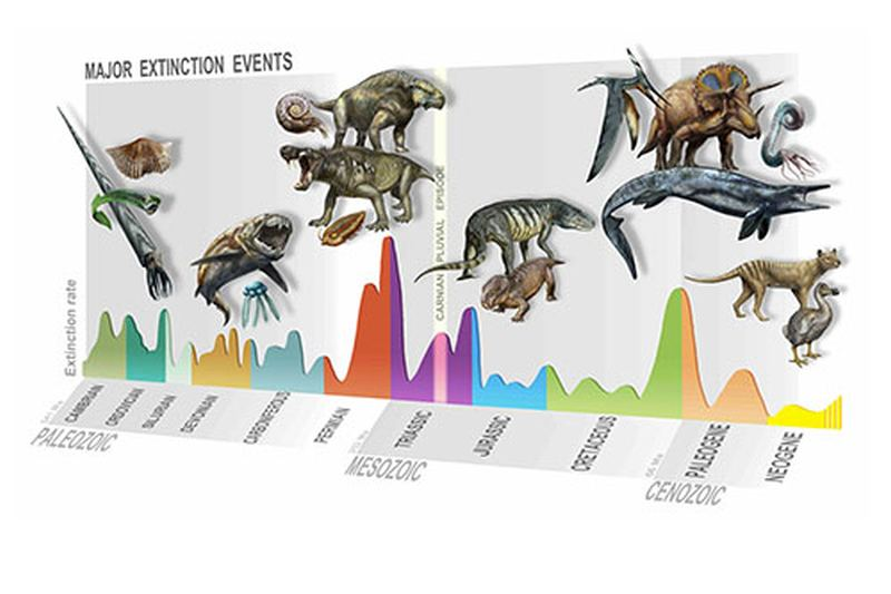 Summary of major extinction events through time, highlighting the new, Carnian Pluvial Episode at 233 million years ago. Image Credit: © D. Bonadonna/ MUSE, Trento.